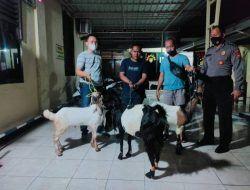 Curi 3 Kambing, Warga Desa Boto Tuban Diamankan Polisi