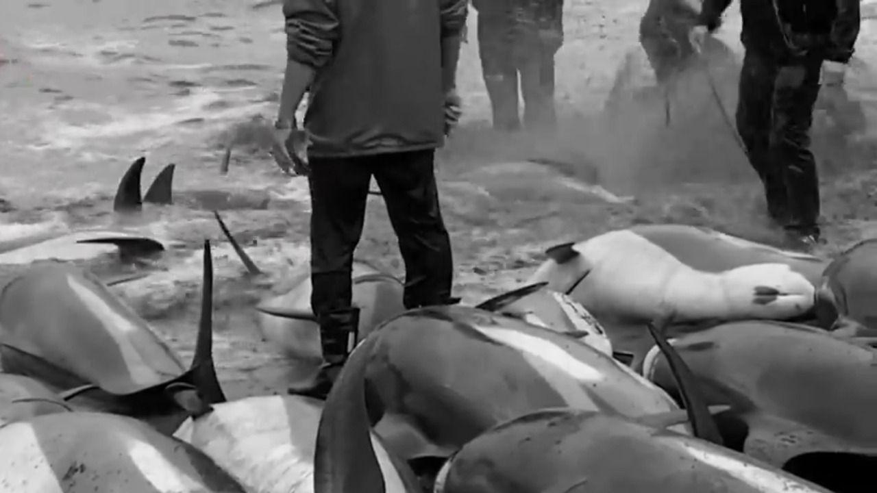Lebih dari 1.400 lumba-lumba dibantai di Kepulauan Faroe pada Minggu (12/9/2021)/tugu jatim