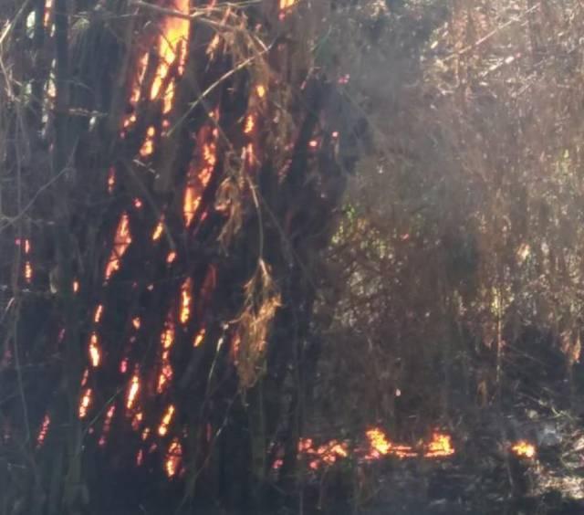 Kebakaran rumpun bambu di Desa Sambiroto, RT 5, RW 01, Kecamatan Kapas, Kabupaten Bojonegoro, Sabtu (18/09/2021). (Foto: Damkar Bojonegoro/Tugu Jatim)