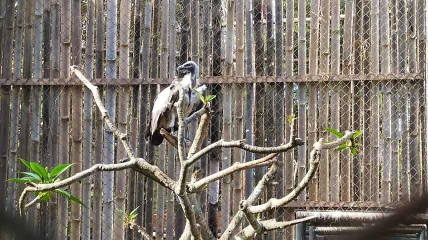 Burung pemakan bangkai, satu dari ribuan unggas koleksi Eco Green Park. (Foto: M Ulul Azmy/Tugu Malang/Tugu Jatim)
