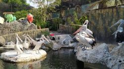 Burung Pelican, satu dari ribuan unggas koleksi Eco Green Park. (Foto: M Ulul Azmy/Tugu Malang/Tugu Jatim)