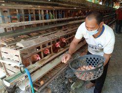 Harga Telur Anjlok, Peternakan Ayam Milik Lapas Tuban Terancam Gulung Tikar