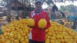 Suntari, petani asal Desa Karangasem, Kecamatan Jenu, Kabupaten Tuban, yang sukses membudidayakan melon varietas golden Alisha. (Foto: Mochamad Abdurrochim/Tugu Jatim)