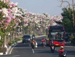 Jadi Kota Ternyaman di Indonesia, 10 Kampung di Surabaya Raih Penghargaan Proklim dari KLHK