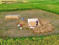 Bojonegoro Gratiskan Benih dan Pupuk bagi Pemilik Kartu Petani Mandiri