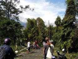 Diterpa Angin Kencang, Pohon Setinggi 15 Meter di Kota Batu Tumbang