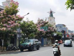 5 Lokasi Cantik di Kota Batu Berhias Tabebuya ala Jepang dan Korea