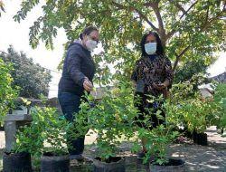 KRPL Selade Berseri Pakai Pupuk Sampah Organik, Pemkot Kediri Fasilitasi Uji Lab Nutrisi